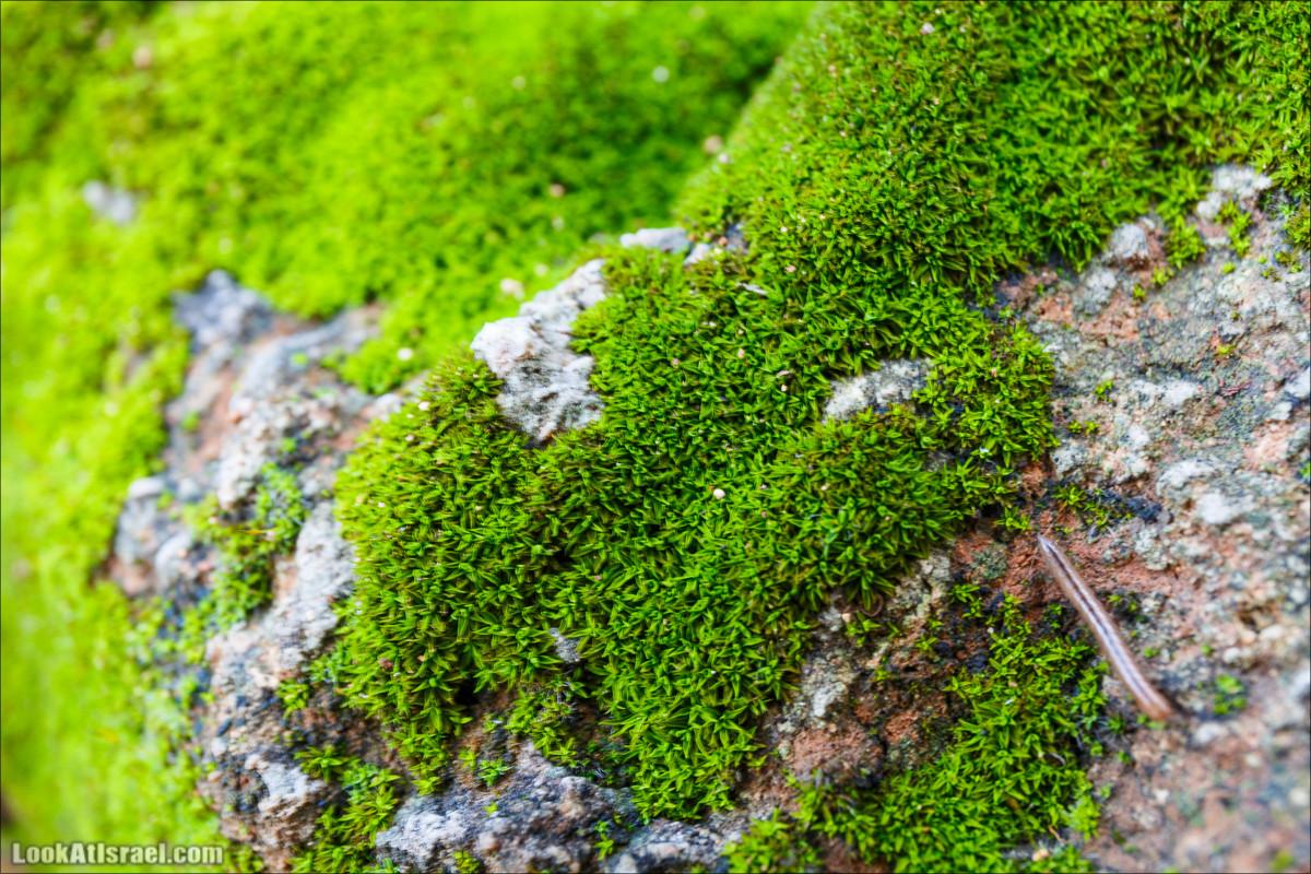النباتات اللاوعائية تنمو في العادة قرب سطح الأرض لأنه ليس لها